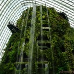 Cloud Forest1