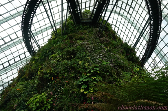 Cloud Forest13