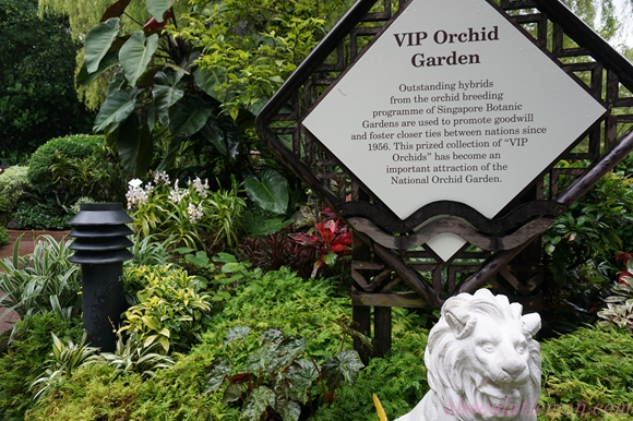 National Orchid Garden12