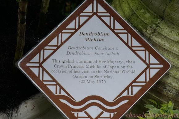 National Orchid Garden14