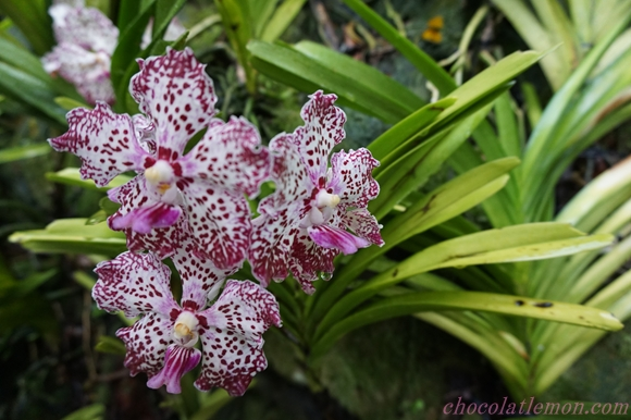 National Orchid Garden18