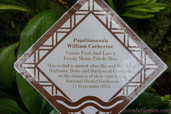National Orchid Garden18