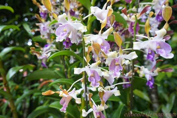 National Orchid Garden7