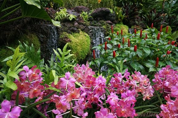 National Orchid Garden3