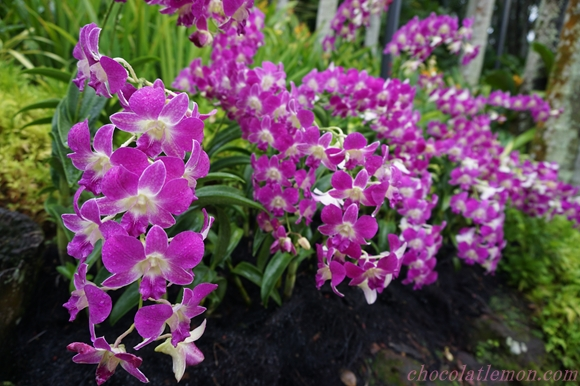 National Orchid Garden9