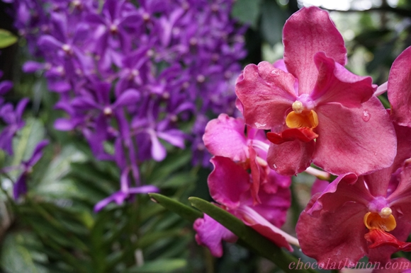 National Orchid Garden25