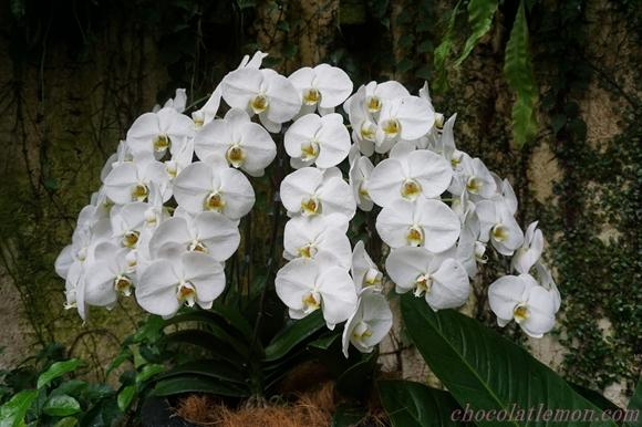 National Orchid Garden21