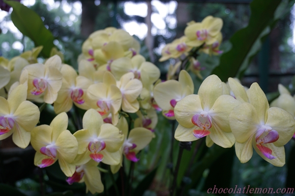 National Orchid Garden23