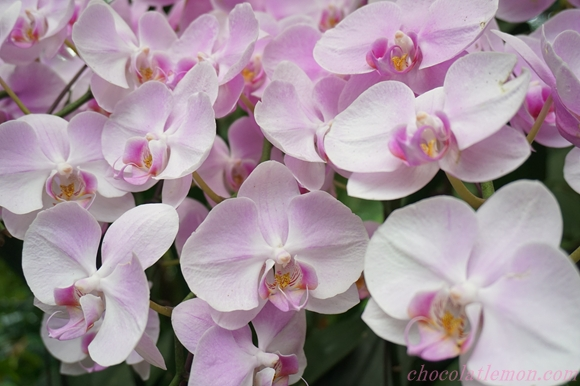 National Orchid Garden19