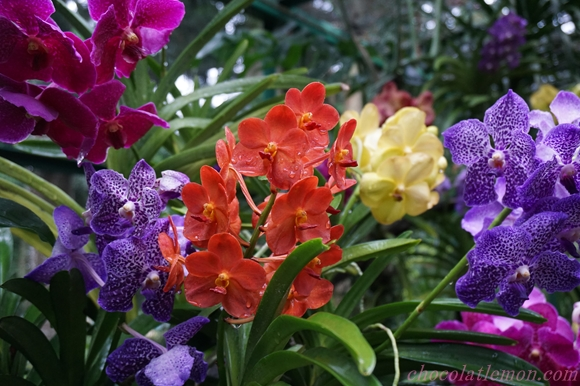 National Orchid Garden22