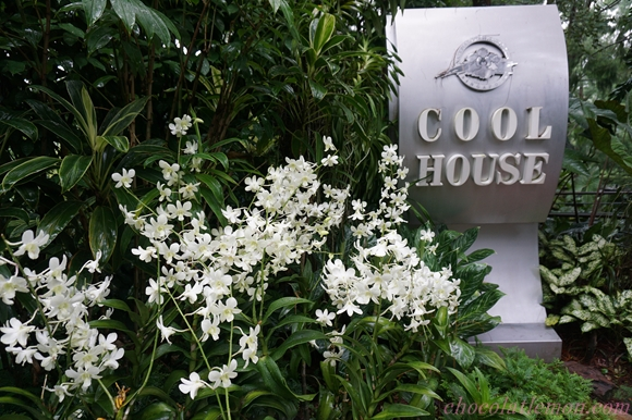 National Orchid Garden28