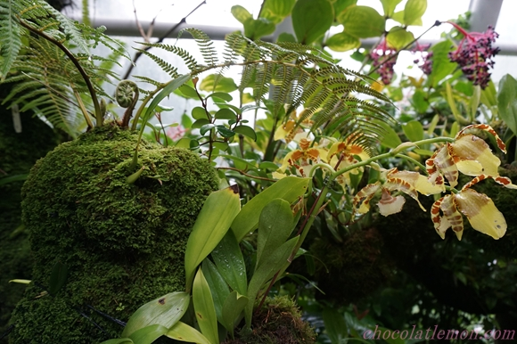National Orchid Garden32