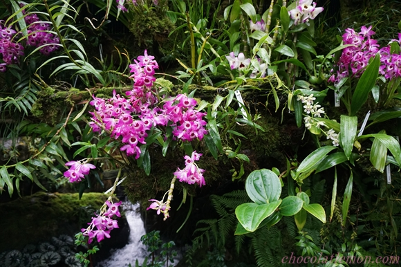 National Orchid Garden30