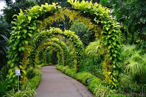National Orchid Garden5