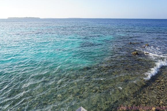 amilla-sea2