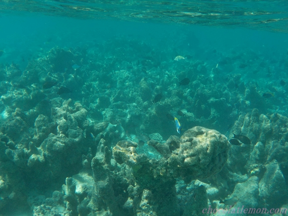 amilla-sea1