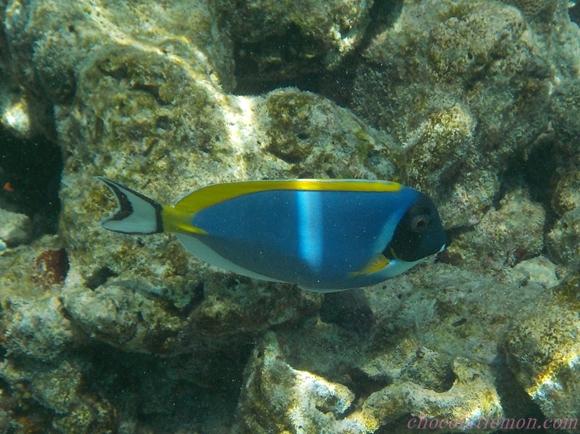 amilla-sea8