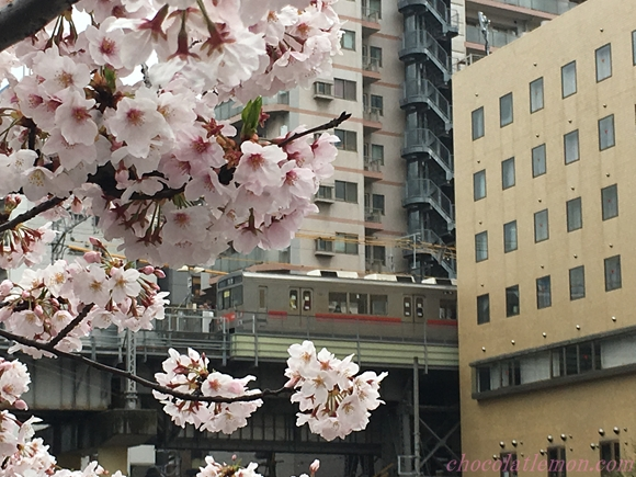 目黒川桜18