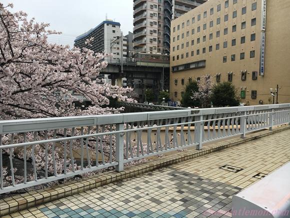 目黒川桜19