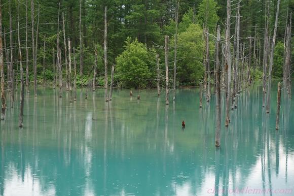青い池14