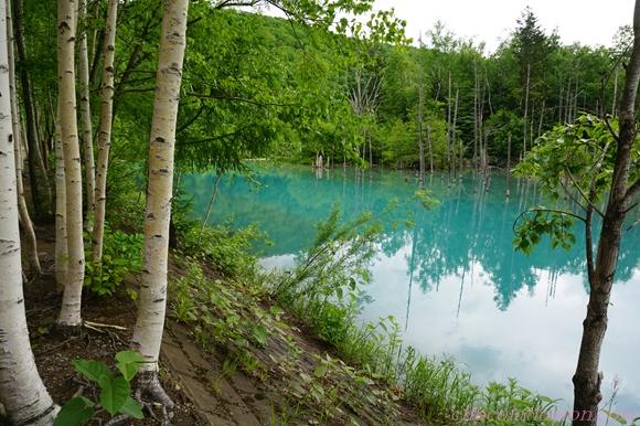 青い池12