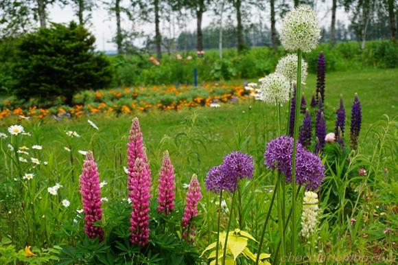 紫竹ガーデンカフェ1