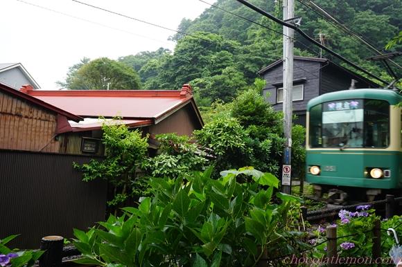 江ノ電とアジサイ5