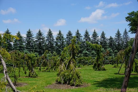 真鍋庭園11