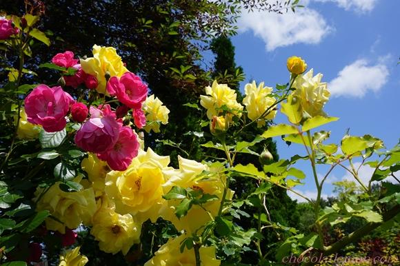 真鍋庭園14