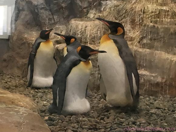 旭山ペンギン10