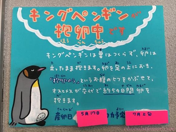 旭山ペンギン12