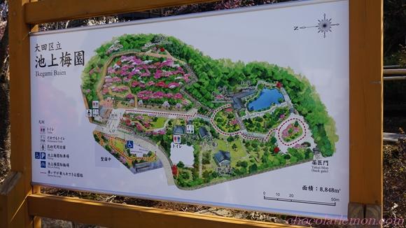 池上梅園5