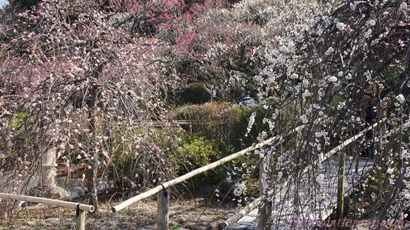 池上梅園12