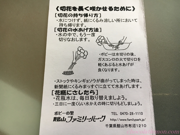 キリ花ポピー1