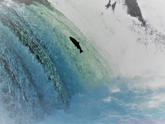さくらの滝12