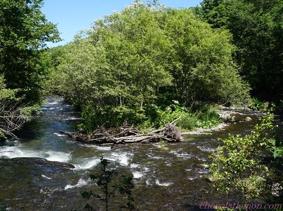 さくらの滝10