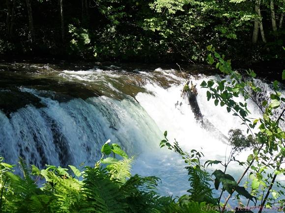 さくらの滝5