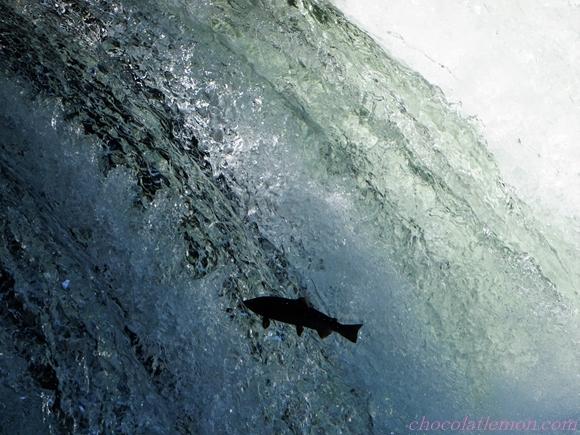 さくらの滝7