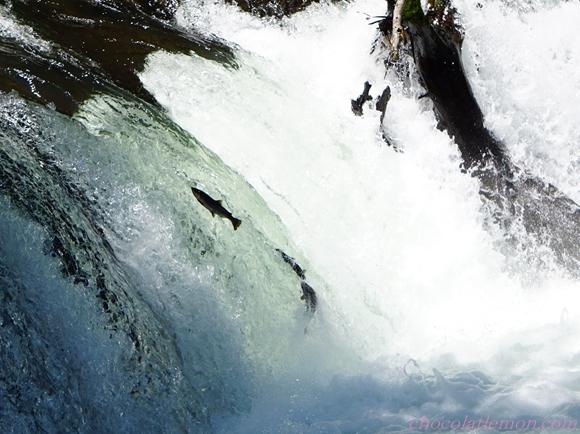 さくらの滝8