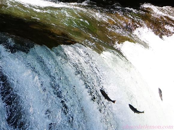 さくらの滝1