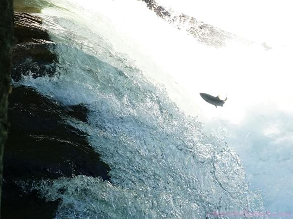 さくらの滝9