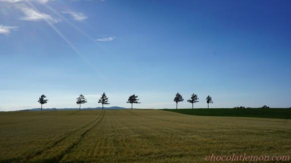 メルヘンの丘4