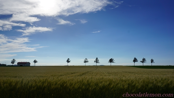 メルヘンの丘6