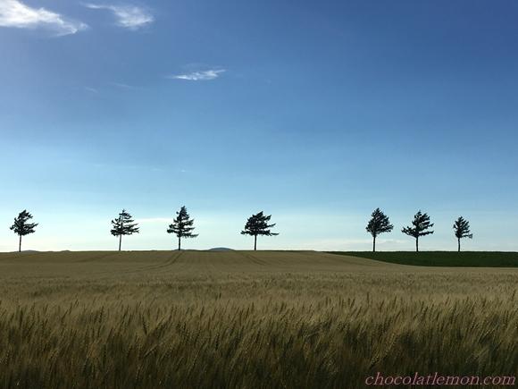 メルヘンの丘1