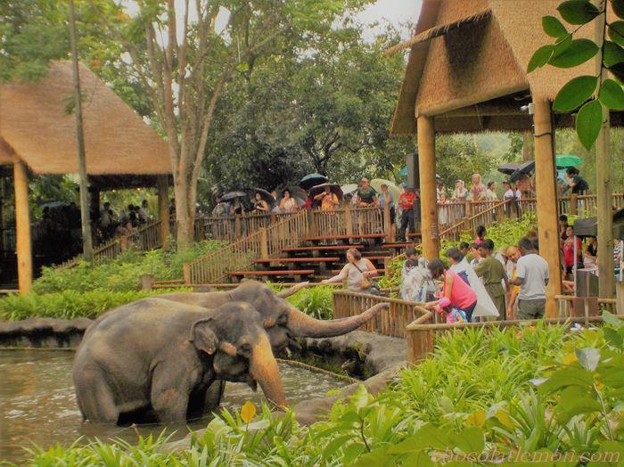 シンガポールZOO象