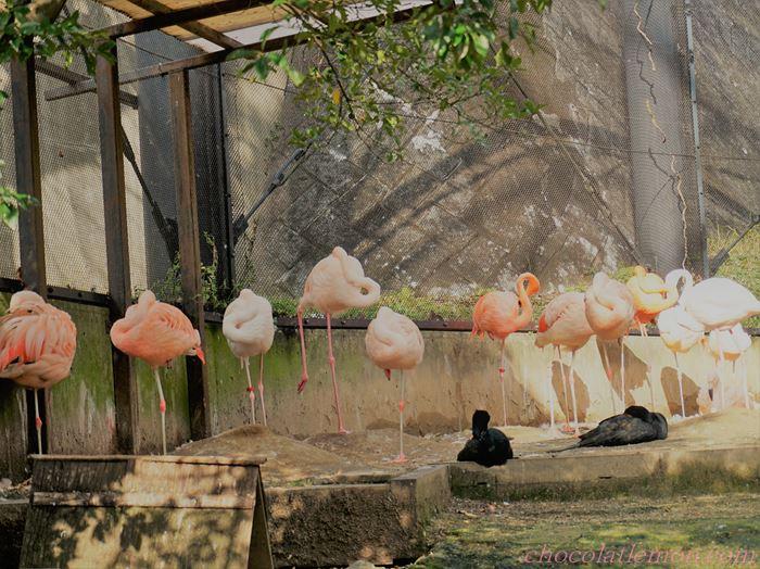福岡市動植物園1