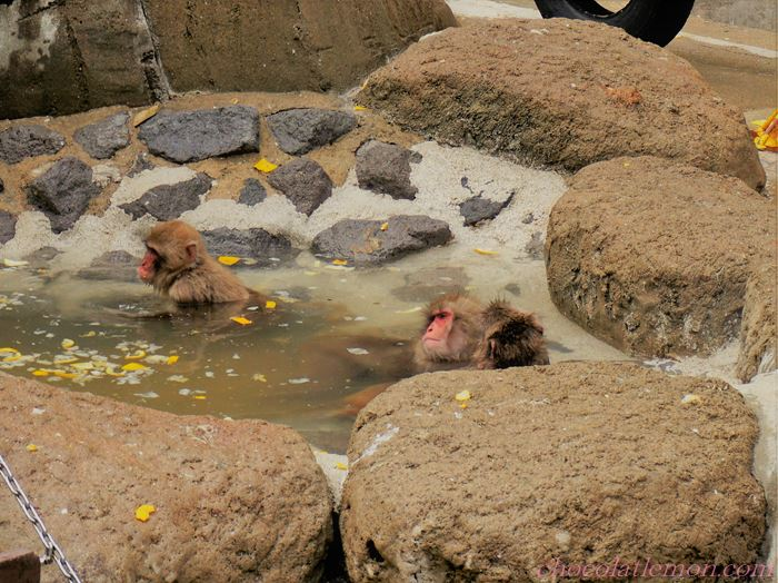 福岡市動植物園4