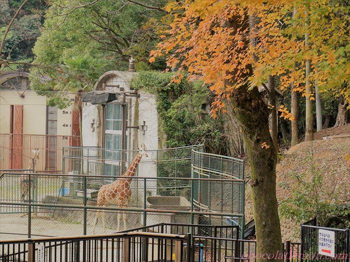 福岡市動植物園6