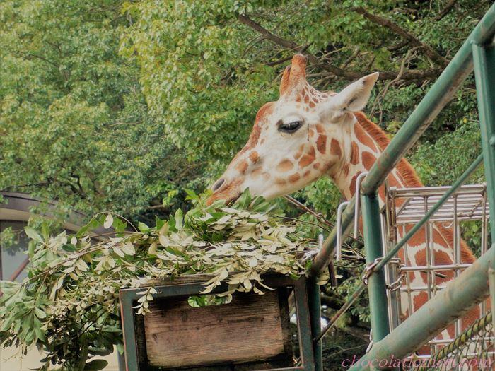 福岡市動植物園7