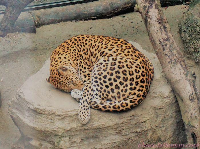 福岡市動植物園10